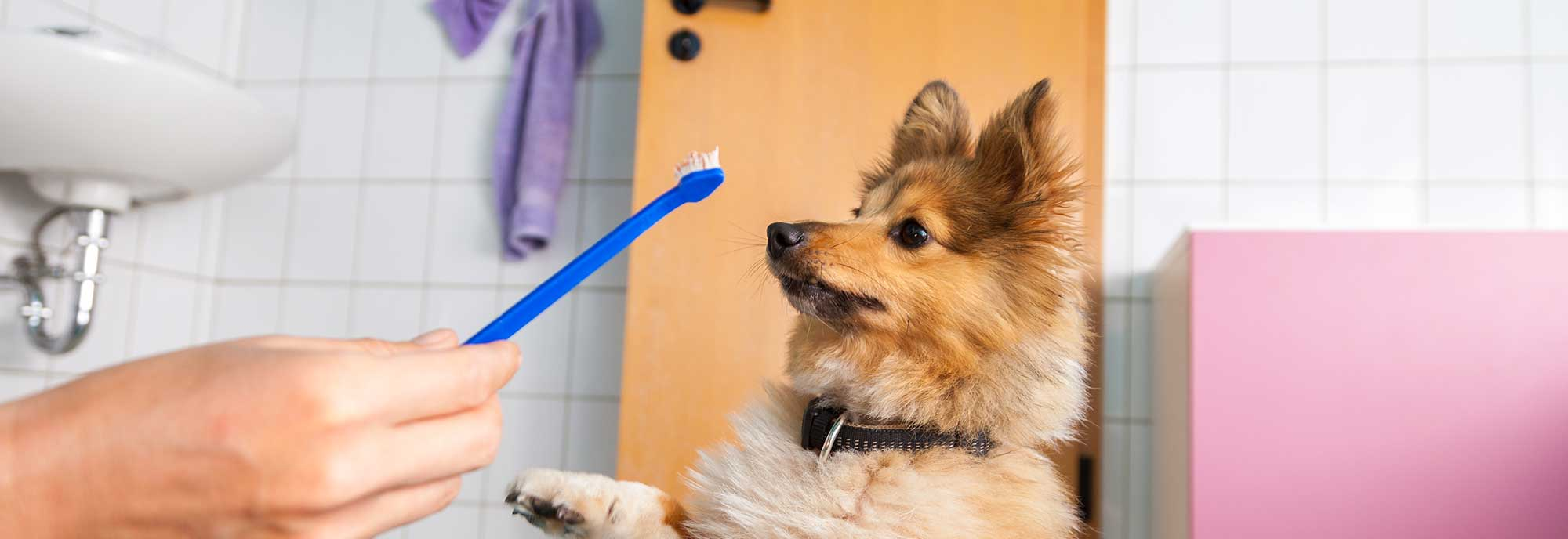 Dog wondering what that tooth brush is